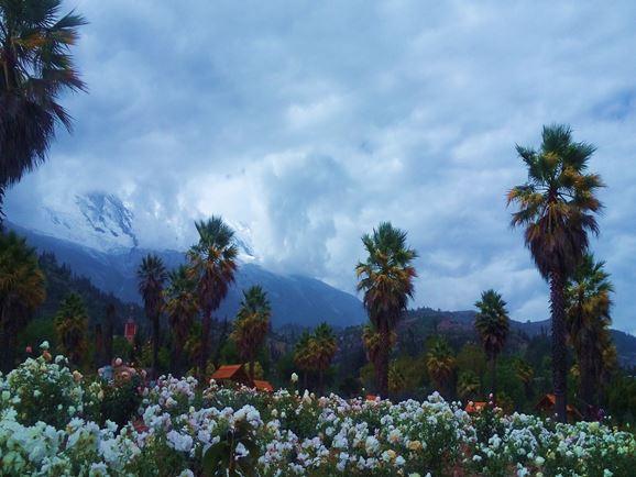 yungay-flores